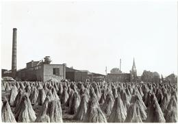 KUURNE - Vlas - Lin  - N° 11 - Echte Foto - Uitg. St Michiels Drukkerij - Kuurne