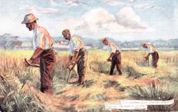 Men Harvesting Harvest - Raphael Tuck & Sons Oilette Country Life No. 9075 - 2 Scans - Cultivation