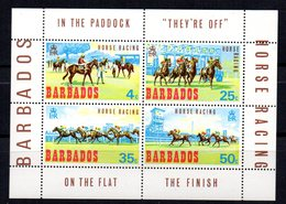 Hb-1 Barbados - Caballos