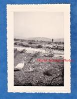 Photo Ancienne - Secteur DJEBEL KEBIR / BIZERTE ( Tunisie )- Canard Blanc Au Camp Militaire Français - 1956 - Mascotte ? - Guerre, Militaire