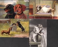 Chien Dog Hond - Lot 4 Cartes (animation, Illustrateur...) - Chiens