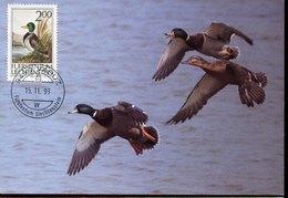46298  Liechtenstein, Maximum 1993,  Canard,  Duck  Ente - Canards