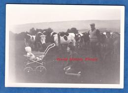 Photo Ancienne Snapshot - Enfant Découvrant Les Vaches - Agriculture Bébé Homme Femme Vache Cow - Non Classificati