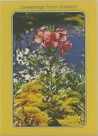 Thèmes. Fleurs. Islande Epilobium Latifolium Neuve (fleurs) & Blaklokke Dannemark & Jonquilles & Jonquilles Vn194 - IJsland