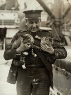 INDIE Armee GATO CHAT KAT CAT  16*12CM Fonds Victor FORBIN 1864-1947 - Fotos