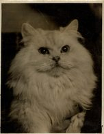 SOUTH KENTISH TOWN  SOUTHERN COUNTIES CAT SHOW  GATO CHAT KAT CAT  20*15CM Fonds Victor FORBIN 1864-1947 - Fotos