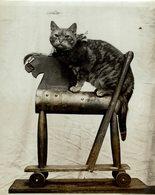 MASTER VICTOR HELGATE  TOY RAILWAY ENGINE GATO CHAT KAT CAT  22*17CM Fonds Victor FORBIN 1864-1947 - Fotos
