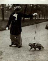 PERSIAN CAT HENSTON GARDENS   GATO CHAT KAT CAT  22*17CM Fonds Victor FORBIN 1864-1947 - Non Classificati