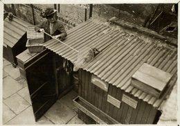 HOME FOR LOST CATS  GATO CHAT KAT CAT  16*12CM Fonds Victor FORBIN 1864-1947 - Non Classificati