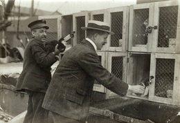 LE CHAT  POUR INDIE INDIA  GATO CHAT KAT CAT  16*12CM Fonds Victor FORBIN 1864-1947 - Fotos