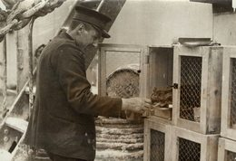 LE CHAT  POUR INDIE INDIA  ARMEE SALUT  GATO CHAT KAT CAT  16*12CM Fonds Victor FORBIN 1864-1947 - Fotos
