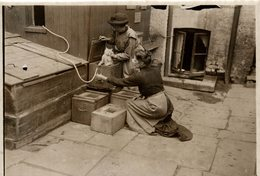 THE FELLOWSHIP LOST CATS SHELTON SELINGTON GATO CHAT KAT CAT  16*12CM Fonds Victor FORBIN 1864-1947 - Fotos