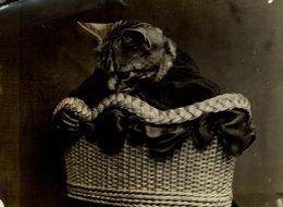 GATO CHAT KAT CAT  20*15CM Fonds Victor FORBIN 1864-1947 - Fotos