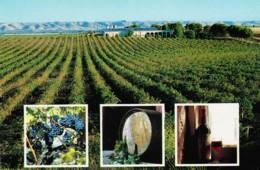 McLaren Vale Wine Producing Area - South Australia - Prepaid PC, Unused - Australia