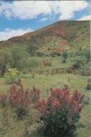 Flinders Ranges With Wildflowers, South Australia - Prepaid PC, Unused - Flinders Ranges