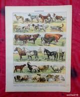 Planche Originale 32,5 X 25 Cm-  Nouveau Larousse Illustré: MAMMIFERES -  Illustration A. MILLOT Et VIGNEROT DEMOULIN - Animals