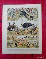 Planche Originale 32,5 X 25 Cm-  Nouveau Larousse Illustré: OISEAUX-  Illustration A. MILLOT - Animals
