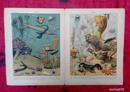 2 Planches Originales Reliées 32,5 X 25 Cm -  Nouveau Larousse Illustré: OCEAN -  Illustration A. MILLOT - Animals
