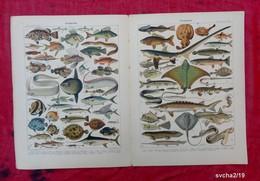 2 Planches Originales Reliées 32,5 X 25 Cm-  Nouveau Larousse Illustré: POISSONS-  Illustration A. MILLOT - Animals