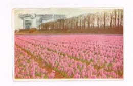 Hyacinthenveld.Gertrude. Expédié De Breda à Bruxelles - Bloemen