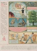 Image - Religieuse - 1912 -  290X225 - LA GRÂCE - La Gloire Du Ciel. - Santini