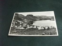 PICCOLO FORMATO PECORE GREGGE THJORSARDALUR VALLEY NEAR MT. HEKLA AUTUMN ICELAND TOURISTN BUREAU REYKJAVIK ISLANDA - Islanda