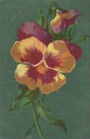AL65 Flowers - Daisy, Pansie - Flowers, Plants & Trees