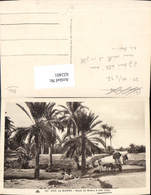 622401,Environs De Biskra Route De Biskra A Sidi Obka Palmen Esel Algeria - Algerien