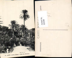 622340,Alger Algier Jardin D Essai Allee Des Palmiers Palme Algeria - Ohne Zuordnung