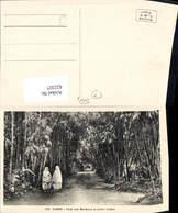 622327,Alger Algier Allee Des Bambous Au Jardin D Essai Frauen Volkstypen Algeria - Algerien