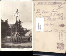 622270,Century Plant Agave Kew Gardens Richmond United Kingdom - Ohne Zuordnung