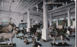 AO81 Provincial Museum, Victoria, B.C. - Natural History, Animals - Victoria