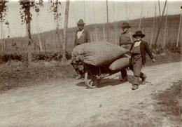HOP PICKING  BAVARIA GERMANY DEUTSCHLAND  Hallertau Holledau HOPFEN  +- 16* 12 CM Fonds Victor FORBIN (1864-1947) - Profesiones