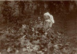 HOP PICKING  BAVARIA   DEUTSCHLAND AGRICULTURE Hallertau Holledau HOPFEN +- 16* 12 CM Fonds Victor FORBIN (1864-1947) - Non Classificati