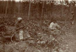 HOP PICKING  BAVARIA  GERMANY DEUTSCHLAND  Hallertau Holledau HOPFEN +- 16* 12 CM  Fonds Victor FORBIN (1864-1947) - Non Classificati