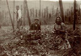 HOP PICKING  BAVARIA   Hallertau Holledau HOPFEN +- 16* 12 CM  Fonds Victor FORBIN (1864-1947) - Fotos