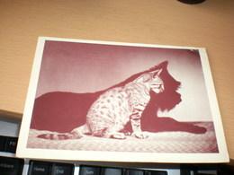 Wiener Tierschutzverein Wien I Schulof Nr 6  Dog Cat Shadow - Chats