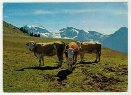 Vaches // Vaches à Planachaux-sur-Champéry - Vaches