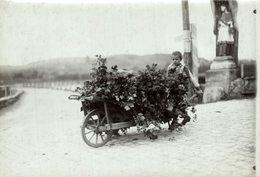 HOP PICKING  BAVARIA GERMANY DEUTSCHLAND Hallertau Holledau HOPFEN +- 16* 12 CMFonds Victor FORBIN (1864-1947) - Profesiones