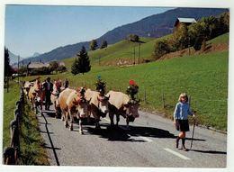 Vaches // La Désalpe - Vaches