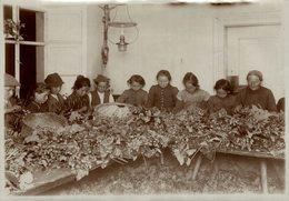 HOP PICKING  BAVARIA GERMANY DEUTSCHLAND Hallertau Holledau HOPFEN +- 18* 13CMFonds Victor FORBIN (1864-1947) - Fotos