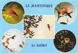 Martinique Oiseau Colibri Huppé Ou Fou Fou (2 Scans) - Non Classés