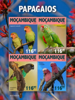 Mozambique 2019    Fauna Parrots S201905 - Mozambique