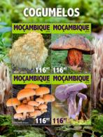 Mozambique 2019  Mushrooms  S201905 - Mozambique