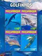 Mozambique 2019    Fauna Dolphins  S201905 - Mozambique