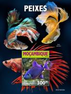 Mozambique 2019    Fauna  Fishes  S201905 - Mozambique