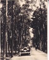 ISLA DE LA TOJA ESPAGNE 1929  Photo Amateur Format Environ 7,5 X 5,5 Cm - Cars