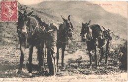 FR66 AMELIE LES BAINS - Xatard - Muletier Et Ses Trois Mules Sur La Route De MONTALBA - Animée - Belle - Autres Communes