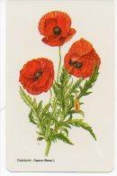Fleur Coquelicot  Papaver Rhaeas Calendrier Calendar - Fleurs