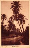 ALGERIE - DANS L'OASIS - Algérie